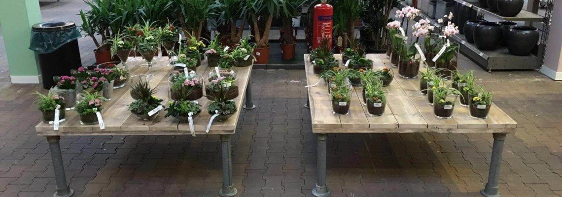 Winkel inrichting Tuinland Wilp