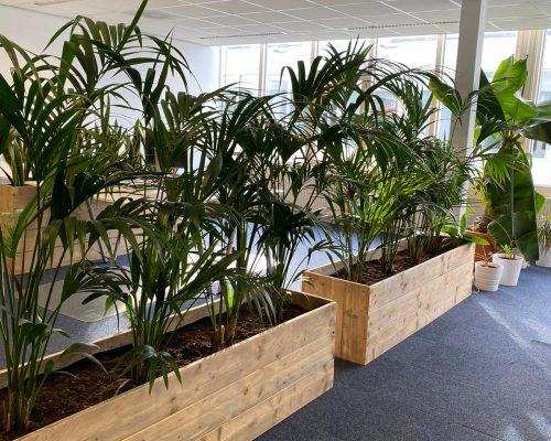 Plantenbakken van steigerhout in kantoor